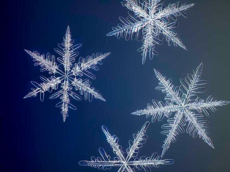 """""""Yellowknife Flurry,"""" a photograph by Nathan Myhrvold, captures the intricate structure of snowflakes. (Nathan Myhrvold / Modernist Cuisine Gallery, LLC)"""