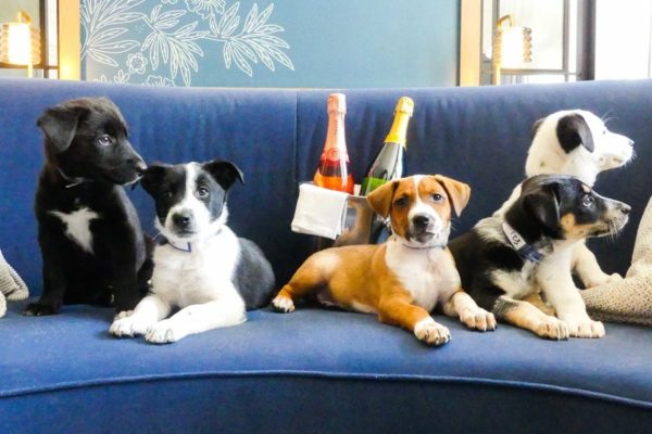 This Denver Hotel Will Deliver Puppies And Prosecco To Your Room